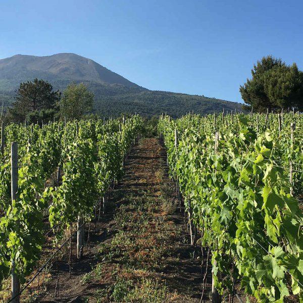 Fondi per imprese agricole e turismo rurale nel vesuviano e altre aree, Abbac invita a partecipare, istituito uno sportello